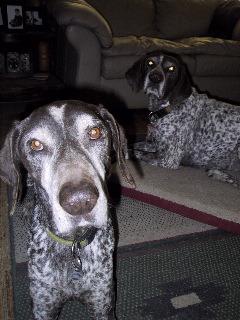 Puppies: file photo