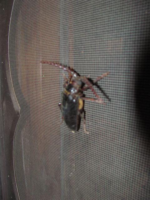 Giant bug.