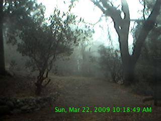 Webcam shot from bobtherieau.com.